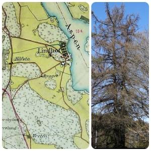 Häradsekonomisk karta Lindhov och lärkträden
